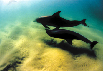 Dolphins at Wategos Beach